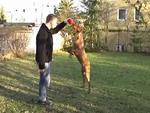 Hogyan vegyünk rá egy kutyát, hogy ne ugráljon fel ránk? részlet